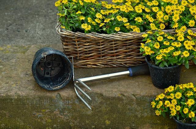 garden-1444235_640